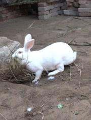 家里養的寵物兔子,真是可愛啊,還很調皮