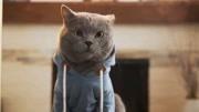貓咪創意短片《世界上最聽話的喵》