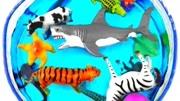 和小熊姐姐一起建造動物園還有給動物們分類吧!趣味玩具故事