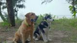神犬小七2:狗狗進行訓練考核,乖乖排隊聽口令,仿佛參加軍訓